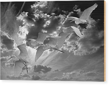 Egrets In Succession Bw Wood Print