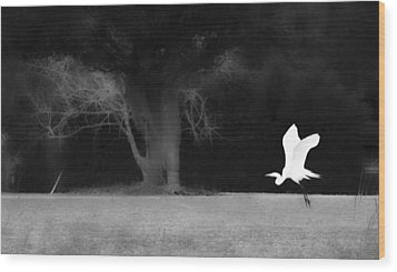 Wood Print featuring the photograph Egret's Shadow by Frank Bright