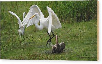 Egrets Taking Flight Wood Print