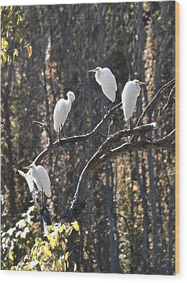 Egrets Wood Print by Valerie Wolf