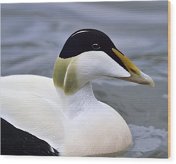 Eider Up Wood Print by Tony Beck