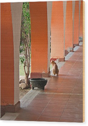 Wood Print featuring the photograph El Gato by Marcia Socolik