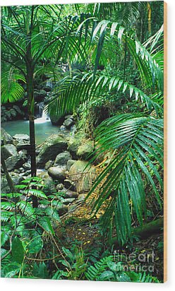 El Yunque Palm Trees And Waterfall Wood Print by Thomas R Fletcher