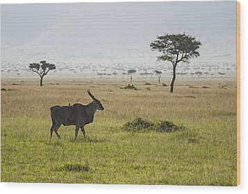 Wood Print featuring the photograph Eland In Masai Mara by Antonio Jorge Nunes