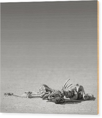 Eland Skeleton In Desert Wood Print by Johan Swanepoel