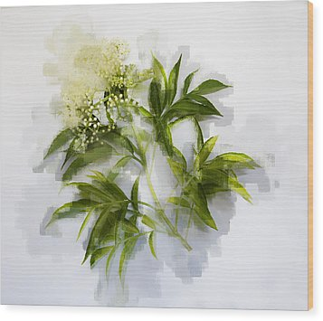 Wood Print featuring the photograph Elderberry  by Linde Townsend