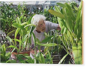 Elderly Woman Examining Plants Wood Print by Jim West
