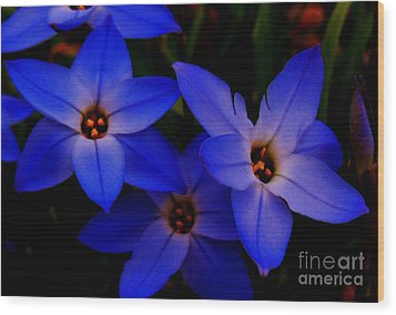 Electric Blue Wood Print by Sharon Costa