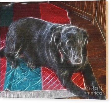 Electrostatic Dog And Blanket Wood Print by Barbara Griffin