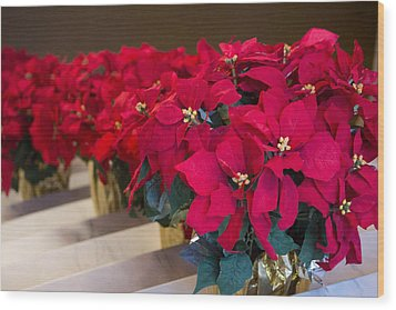 Elegant Poinsettias Wood Print