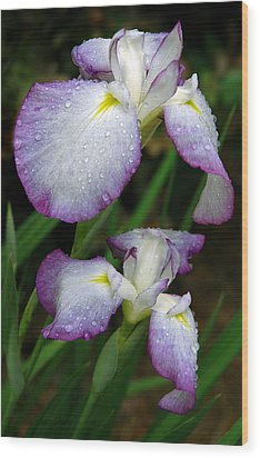 Wood Print featuring the photograph Elegant Purple Iris by Marie Hicks