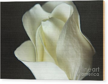 Elegant White Rose Textured Wood Print