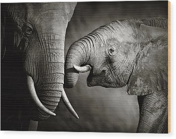 Elephant Affection Wood Print by Johan Swanepoel