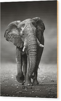 Elephant Approach From The Front Wood Print