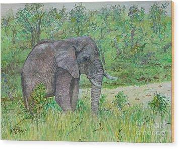 Elephant At Kruger Wood Print by Caroline Street