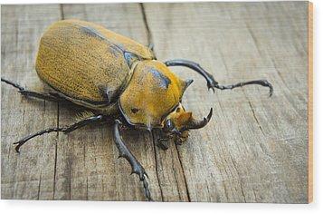 Elephant Beetle Wood Print by Aged Pixel