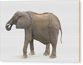 Wood Print featuring the photograph Elephant by Charles Beeler