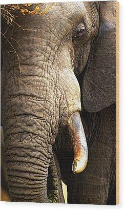 Elephant Close-up Portrait Wood Print