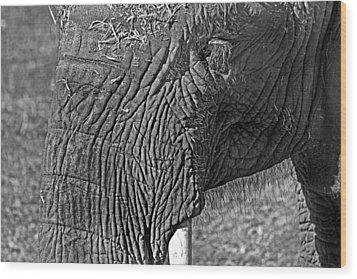 Elephant.. Dont Cry Wood Print