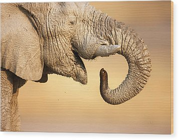 Elephant Drinking Wood Print by Johan Swanepoel