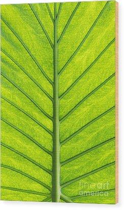 Elephant Ear Taro Leaf Pattern Wood Print by Tim Gainey