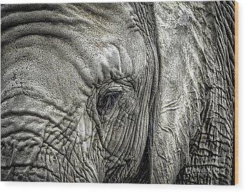 Elephant Wood Print by Elena Elisseeva