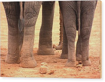 Wood Print featuring the photograph Elephant Family by Amanda Stadther
