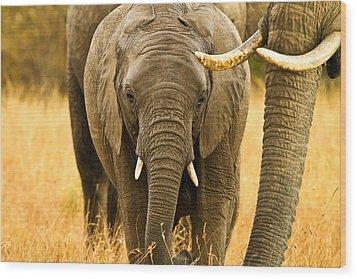 Elephant Family Wood Print by Kongsak Sumano