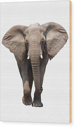 Elephant Isolated Wood Print by Johan Swanepoel