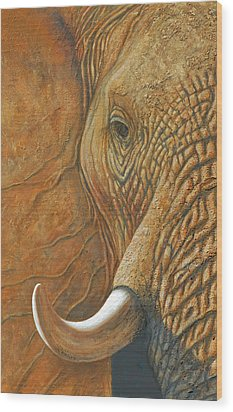 Elephant Matriarch Portrait Close Up Wood Print
