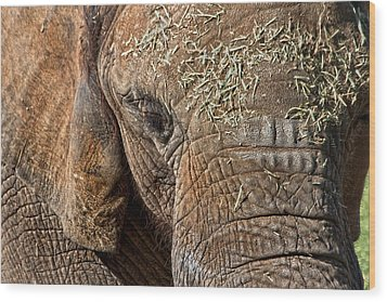 Elephant Never Forgets Wood Print