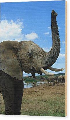 Elephant Posing Wood Print by Ramona Johnston