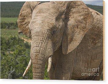 Elephant Profile Wood Print