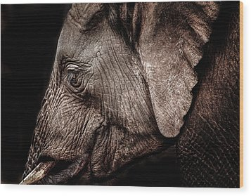 Elephant Profile Wood Print