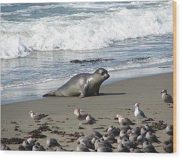 Wood Print featuring the photograph Elephant Seal On Piedras Blancas Beach by Jan Cipolla