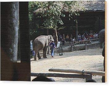 Elephant Show - Maesa Elephant Camp - Chiang Mai Thailand - 011342 Wood Print by DC Photographer