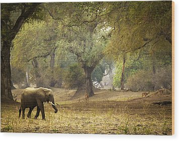 Elephant Strolling In Enchanted Forest Wood Print by Alison Buttigieg