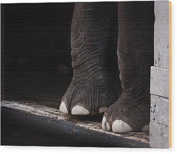 Wood Print featuring the photograph Elephant Toes by Bob Orsillo