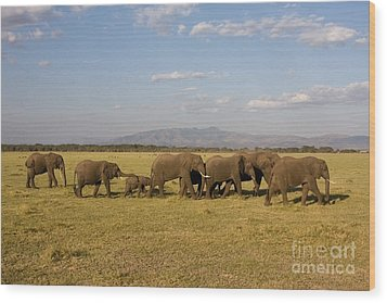 Wood Print featuring the photograph Elephants At Lake Manyara by Chris Scroggins