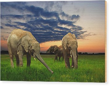 Elephants At Sunset Wood Print by Jaroslaw Grudzinski