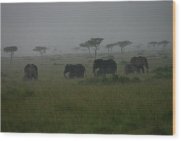 Elephants In Heavy Rain Wood Print by Menachem Ganon