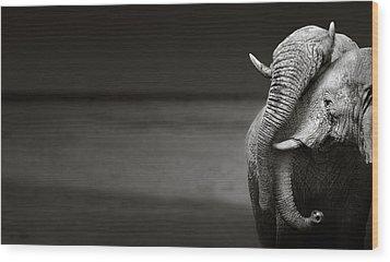 Elephants Interacting Wood Print by Johan Swanepoel