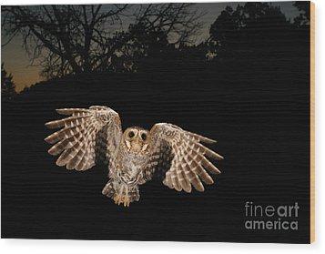 Elf Owl Wood Print by Scott Linstead