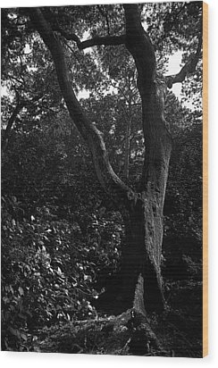Wood Print featuring the photograph Elizabethan Gardens Tree In B And W by Greg Reed