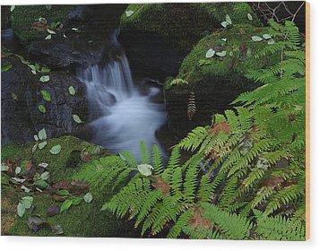 Elk Creek Wood Print