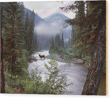 Elk Crossing 2 Wood Print by Leland D Howard