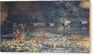 Elk Crossing The Buffalo River Wood Print by Michael Dougherty