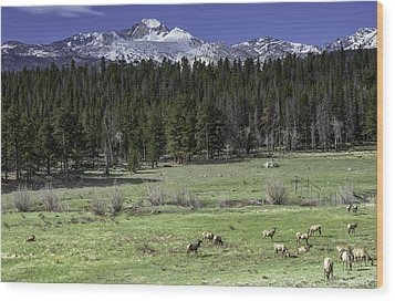 Elk In Meadow Wood Print by Tom Wilbert