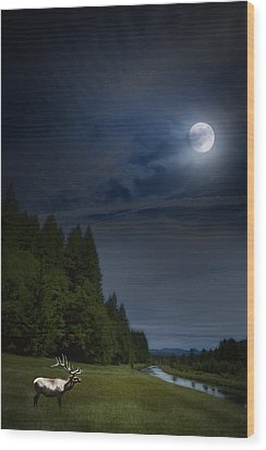 Elk Under A Full Moon Wood Print