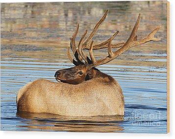 Elk Velveteen  Wood Print